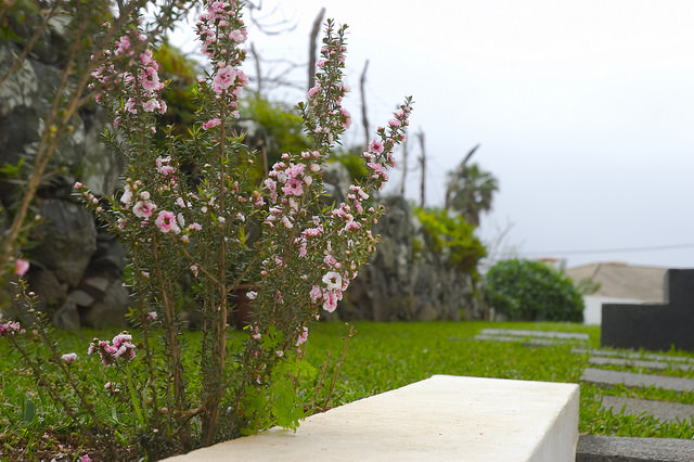 casa do miradouro garden flowers madeira vacation home rental villa luxury pool